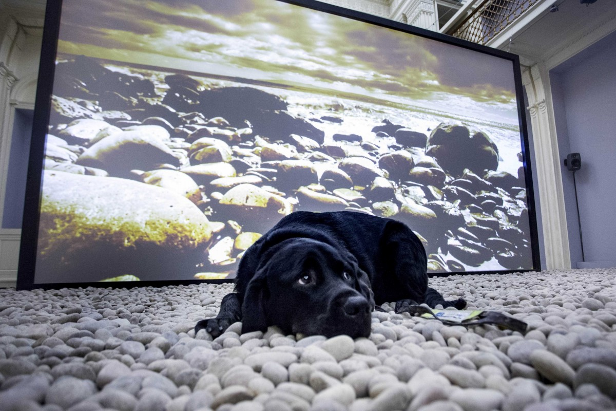 John Akomfrah, 2017. Dog for the blind in front of video still. Installation view, Vertigo Sea, 2015 . Image courtesy Talbot Rice Gallery, the University of Edinburgh.